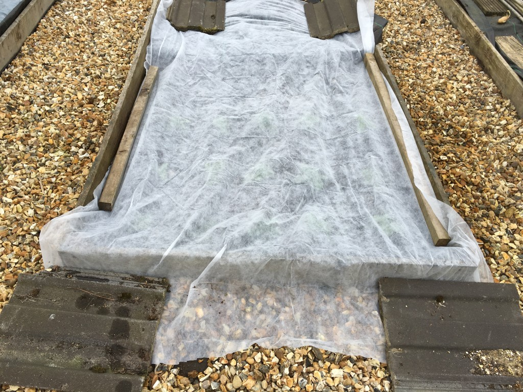A single layer of fleece should be sufficient to ease the plants through the next week or two